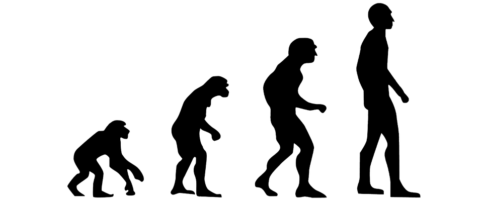 960x400 The Braided Estuary Of Human Evolution Insitome