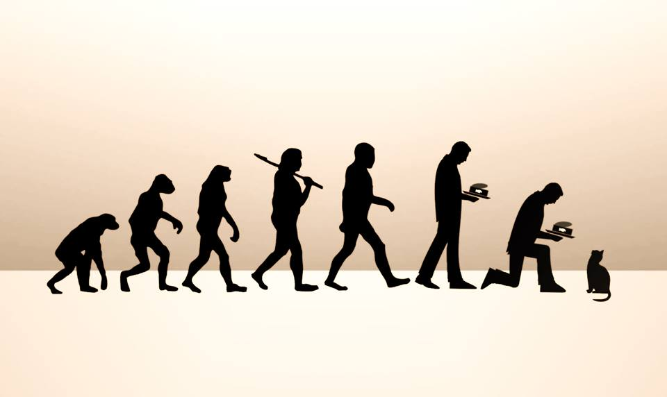 960x572 The Evolution Of Man And The Evolution Of Cats Why Evolution Is True