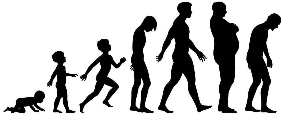 1000x403 Evolution Posture And The Gokhale Method Evolution