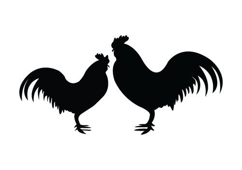 500x350 Two Roosters Standing Face To Face, Rooster Silhouette Vector Is