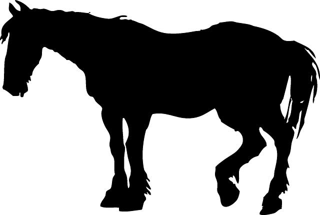 640x430 Head, Silhouette, Cartoon, Farm, Horse, Chicken