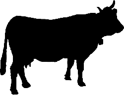 250x192 Free Pictures Cattle