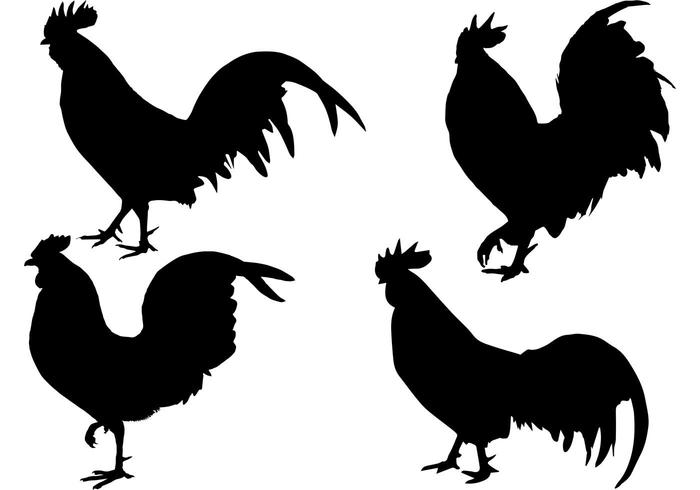 700x490 Rooster On Farm Silhouette