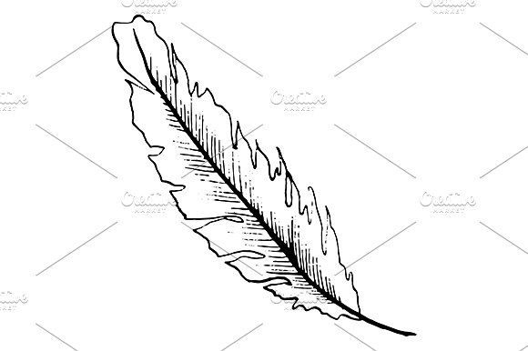 580x386 Art, Watercolor, Vector, Feather, Bird, Isolated, Doodle