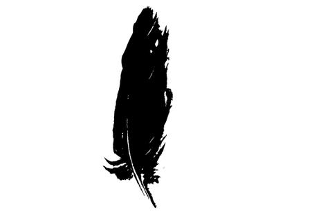 480x309 Feather Silhouette Vector Silhouettes Vector