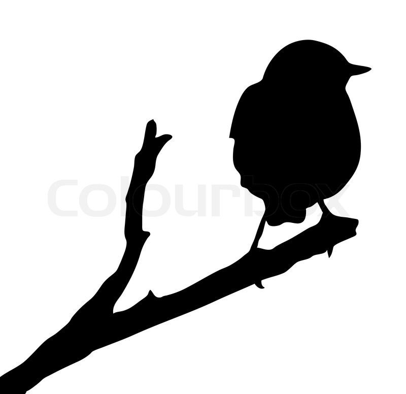 800x776 Vector Silhouette Of The Bird On Branch Stock Vector On Colourbox