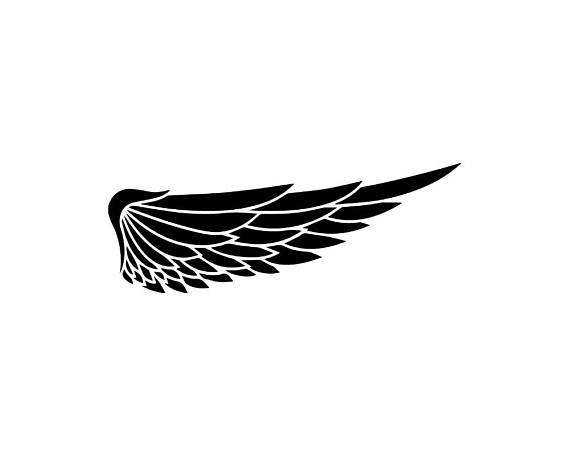 570x456 Wing Feather Vector Bird Symbol Abstract Angel Sign Design