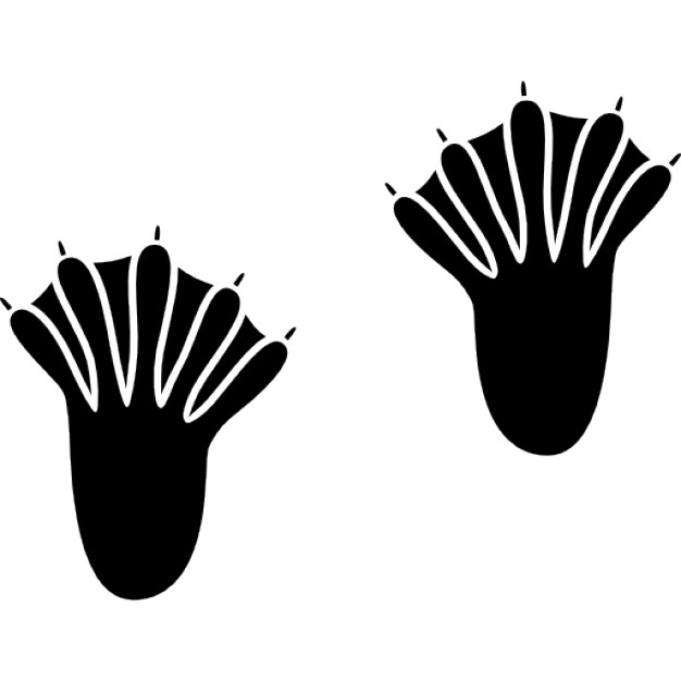 626x626 Webbed Feet Silhouette Icons Free Download
