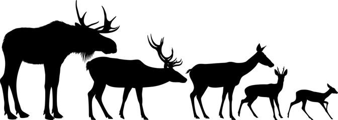 672x240 Search Photos Moose Bull
