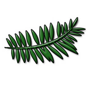300x300 Clipart Picture Of A Fern Leaf