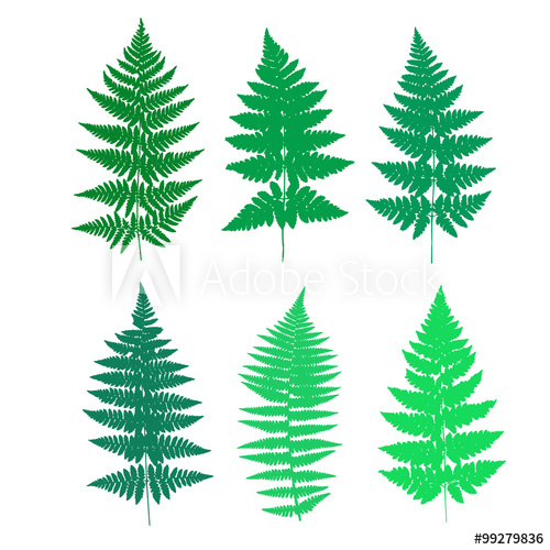 500x500 Set Of Fern Frond Silhouettes. Vector Illustration