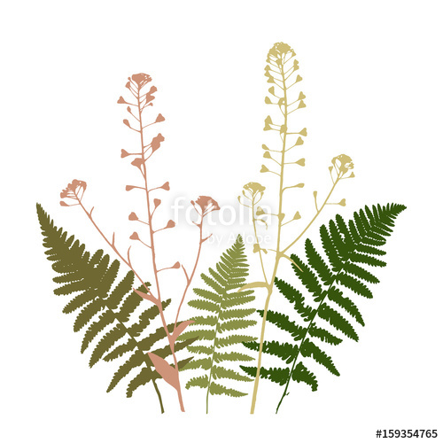500x500 Vector Floral Illustration With Fern Leaves And Shepherd's Purse