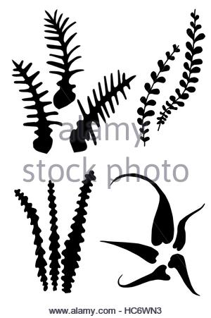 300x451 Fern Leaves Silhouettes Stock Photo, Royalty Free Image 28791432