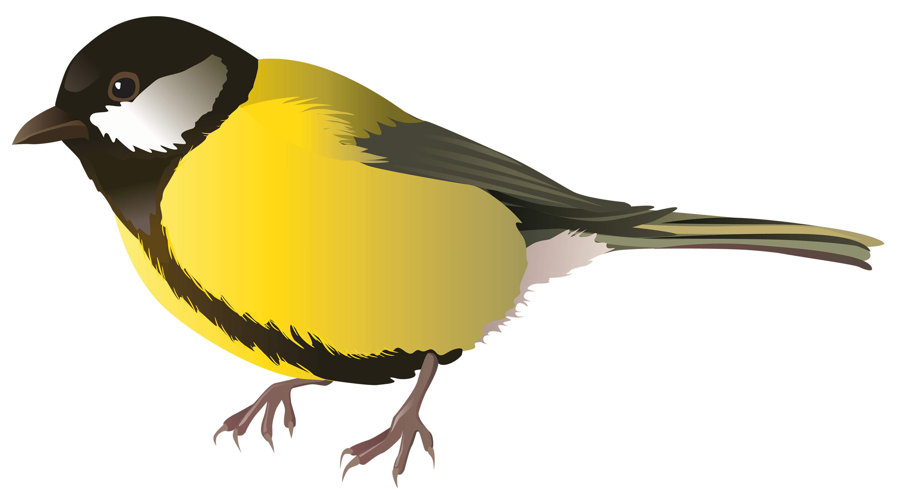 3000x1646 Homely Ideas Bird Clipart Cartoon Bunny Yellow Png Best Web Black