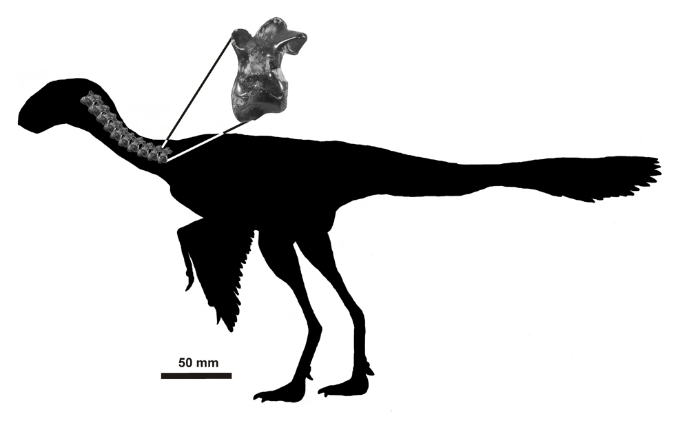 1000x611 The World's Smallest Dinosaur Deposits Magazine