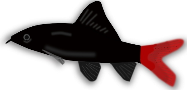 600x290 Fish Silhouette Free Vector Download (6,268 Free Vector)