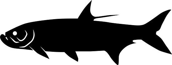 550x207 Tarpon Fish Silhouette (Black) Photographic Prints By