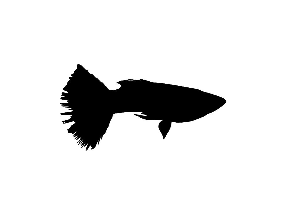 1024x768 Fish Silhouette Clip Art Vector Art Free Vector For Free Download