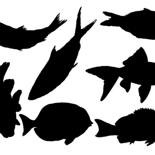650x650 Free Vector Free Fish Silhouette Vector