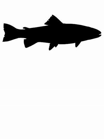 348x464 Image Result For Trout Drawing Outline Fly Fishing