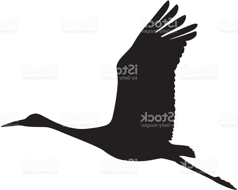 1228x982 Sandhill Crane In Flight Silhouette Gm Createmepink