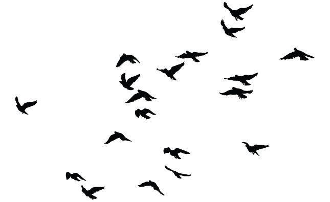 645x395 Birds Vector Pack For Adobe Illustrator Adobe Illustrator, Adobe