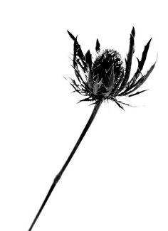 236x325 Flower Silhouette