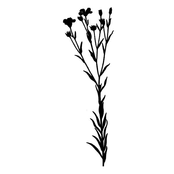 600x600 Wild Flower Silhouette (Free Download) Enliven Designs