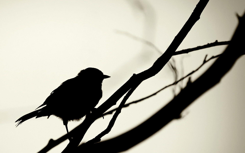 2880x1800 Wallpaper Birds, Shadow, Silhouette, Branch, Simple, Crow