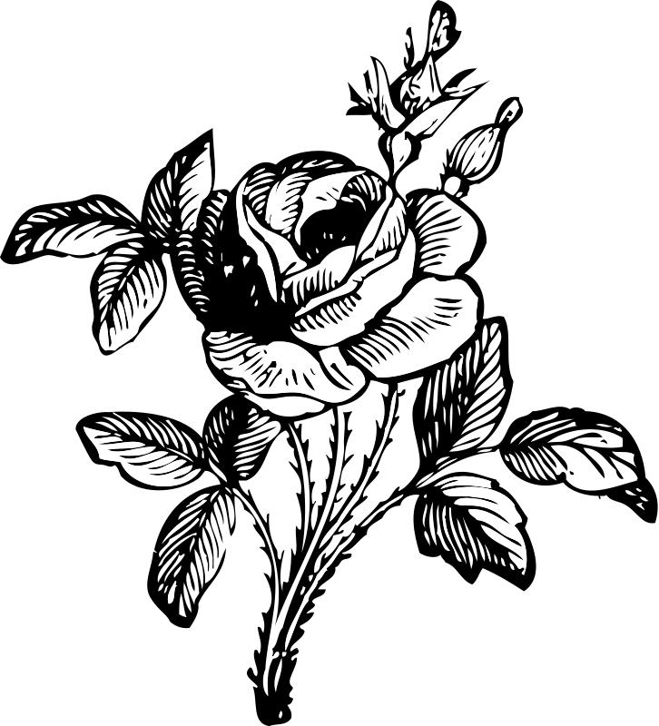 726x800 Marvelous Design Clip Art Rose Flower Silhouette Vector