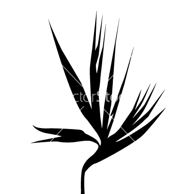 380x400 Birds Of Paradise Flower Silhouette Vector By Samivector
