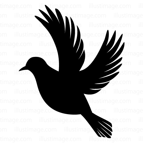 480x480 Free Pigeon Silhouette Fly Cartoon Amp Clipart