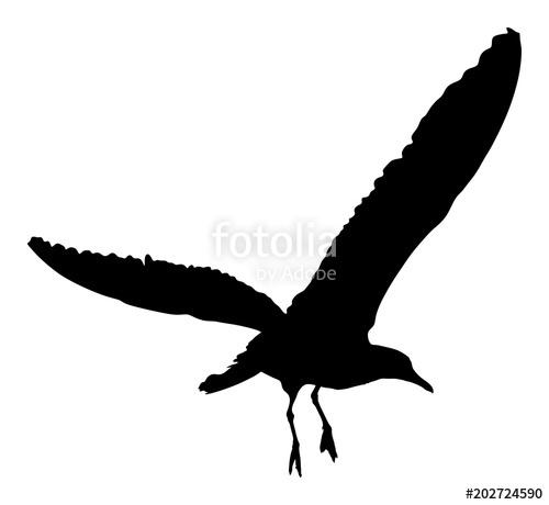 500x460 Seagull Fly Vector Silhouette On White Background, Wings Spread