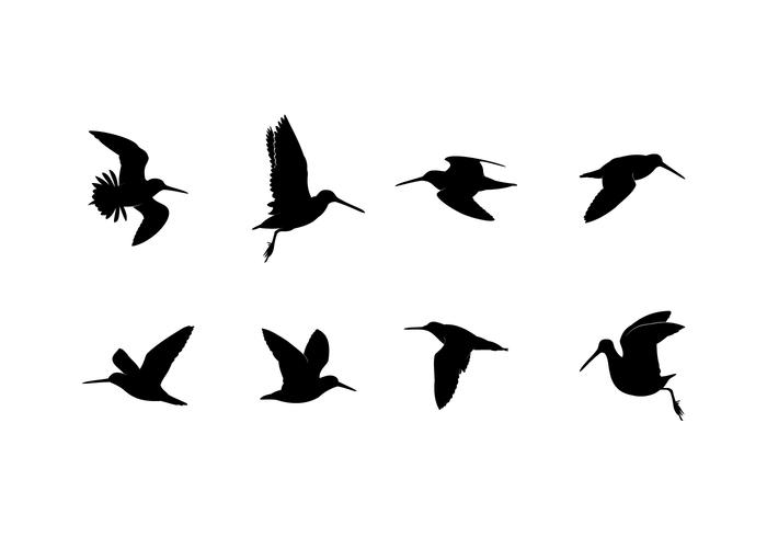 700x490 Silhouette Flying Snipe Free Vector