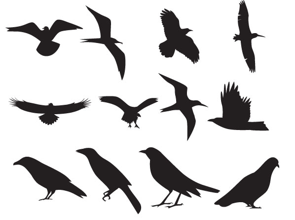 Flying Bird Silhouette Clip Art
