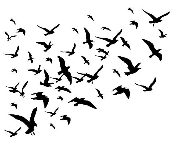 580x490 Flying Birds Flock Silhouette By Microone On @creativemarket
