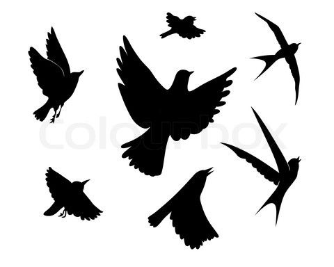 480x384 Stock Vector Of Flying Birds Silhouette On White Background