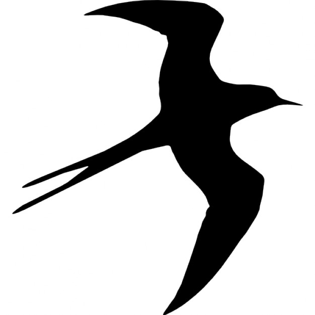 626x626 Swallow Bird Flying Silhouette Icons Free Download
