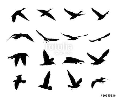 500x419 Silhouettes Of Flying Birds Vector Stock Image And Royalty Free