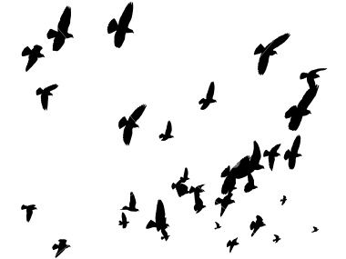 380x285 Silhouettes Of Pigeons Forming A V Formation High Up In The Sky