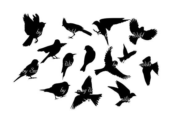 570x403 Cutout Bird Silhouette Flying Clipart