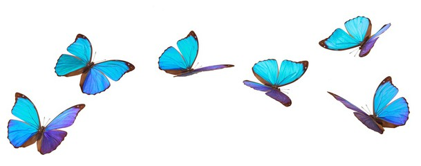 609x240 Search Photos Butterfly