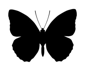 280x240 Search Photos Flying Butterfly