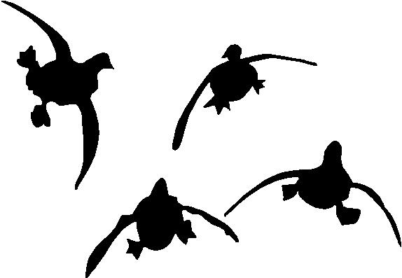 574x397 Flying Duck Clipart Flying Duck Illustration Id506666310