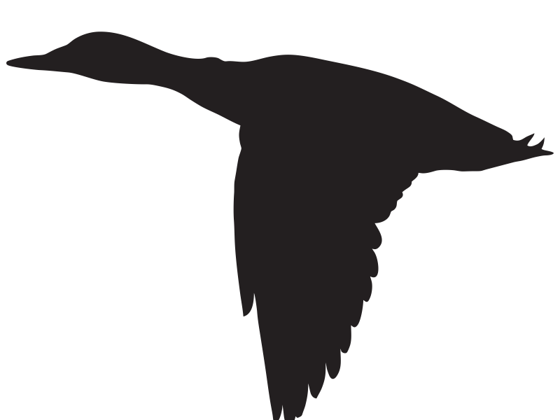 800x600 Wellsuited Flying Duck Silhouette Cliparts Free Download Clip Art