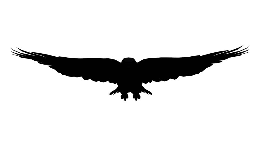 Flying Eagle Silhouette at GetDrawings com | Free for