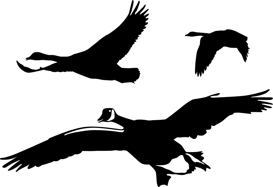 937x643 Geese Flyover Wall Decal