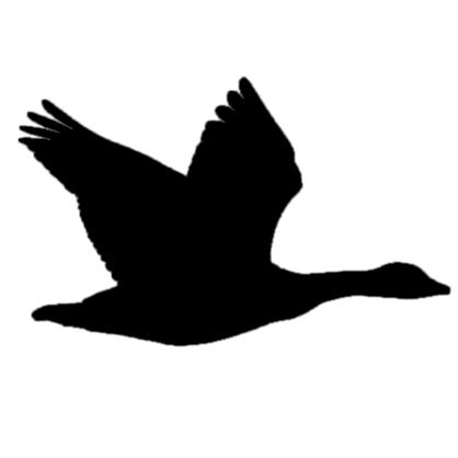 418x418 Canada Goose Flying Ny 26oct12 Kjm 8331 019 Silhouette 1 Bird