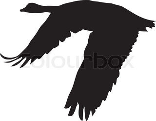 320x248 Vector Silhouette Flying Goose On White Background Stock Vector