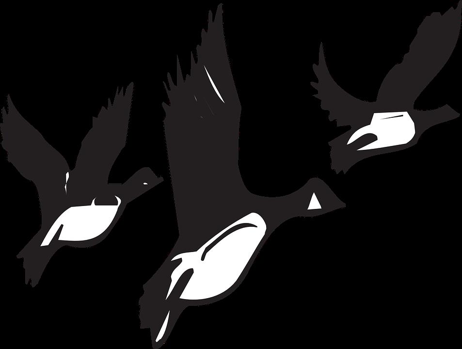 953x720 Flock Of Birds Clipart Goose